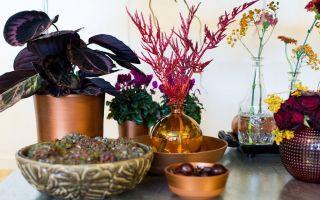 flowertales08lr78-1477559951.jpg