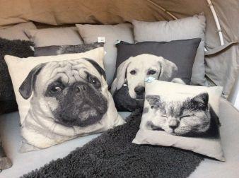 TrendSet-Katzen-Hunde.jpg