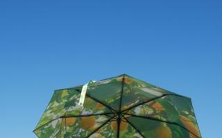 Happysweeds-Regenschirme.jpg