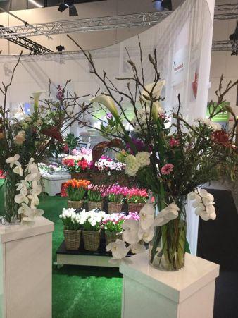 Floradecora_Flowers